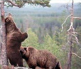 Ad:  ayılar da aşk başkadır.jpg Gösterim: 197 Boyut:  18.3 KB