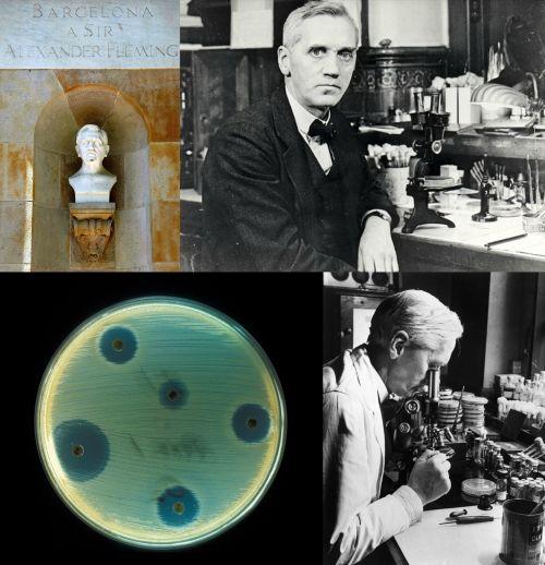 Ad:  Sir Alexander Fleming2.jpg G�sterim: 67 Boyut:  50.5 KB