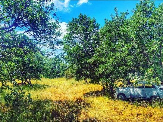 Ad:  araba ağaç doğa.jpg Gösterim: 148 Boyut:  99.2 KB