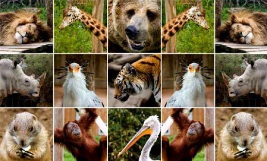 Ad:  Zooloji.jpg Gösterim: 519 Boyut:  47.5 KB
