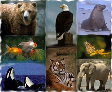 Ad:  Zooloji Nedir.jpg Gösterim: 358 Boyut:  25.1 KB