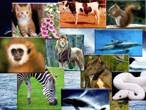 Ad:  Zooloji-2.jpg Gösterim: 322 Boyut:  69.1 KB