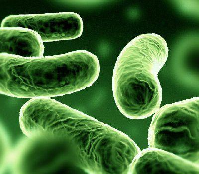 Ad:  Bakteriler.jpg Gösterim: 994 Boyut:  29.3 KB