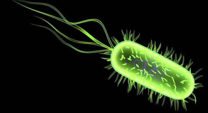 Ad:  bakteri-3.jpg Gösterim: 824 Boyut:  28.9 KB