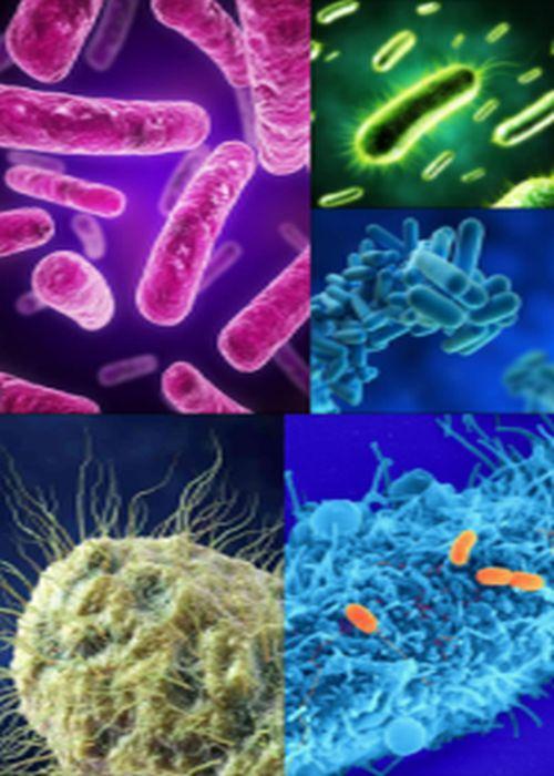 Ad:  Bakteriler-9.jpg Gösterim: 1383 Boyut:  59.8 KB