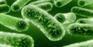 Ad:  Bakterilerin yararları.jpg Gösterim: 1318 Boyut:  12.3 KB