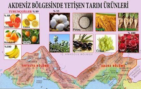 Ad:  Akdeniz_Tarım_Ürünleri.JPG Gösterim: 5411 Boyut:  43.0 KB