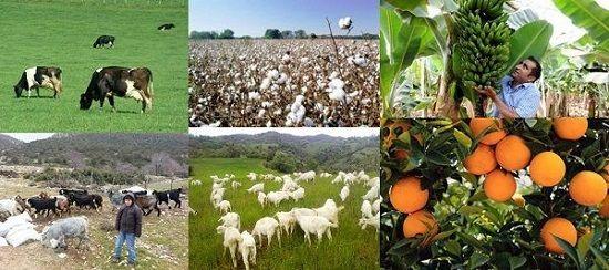 Ad:  Tarım ve Hayvancılık.JPG Gösterim: 5114 Boyut:  48.8 KB