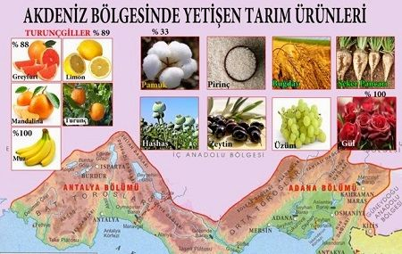 Ad:  Akdeniz_Tarım_Ürünleri.JPG Gösterim: 162 Boyut:  43.0 KB