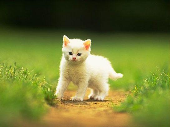 Ad:  kedilerin özellikleri.jpg Gösterim: 151 Boyut:  24.8 KB