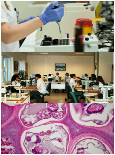 Ad:  patoloji-390x525.jpg Gösterim: 64 Boyut:  65.9 KB