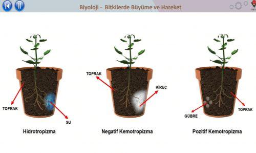 Ad:  Bitkilerde büyüme-3.jpg Gösterim: 1088 Boyut:  19.2 KB