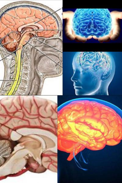 Ad:  Beyin nedir.jpg Gösterim: 602 Boyut:  45.5 KB