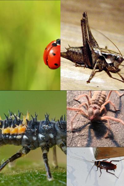 Ad:  Böcekler.jpg Gösterim: 836 Boyut:  39.4 KB