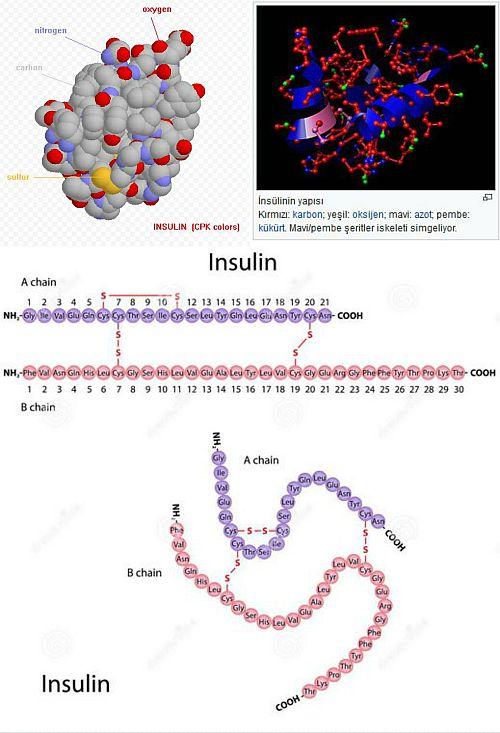 Ad:  insülin.jpg Gösterim: 1268 Boyut:  58.9 KB