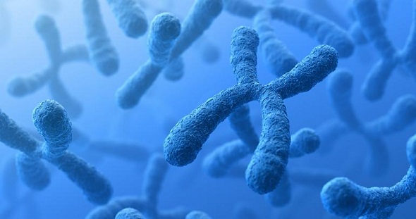 Ad:  kromozom_dna.jpg Gösterim: 9770 Boyut:  47.5 KB