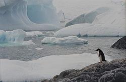 Ad:  Antarctic.jpg Gösterim: 132 Boyut:  7.7 KB