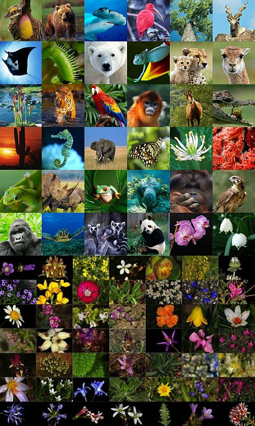 Ad:  Biyolojik Çeşitlilik1.jpg Gösterim: 3192 Boyut:  136.4 KB