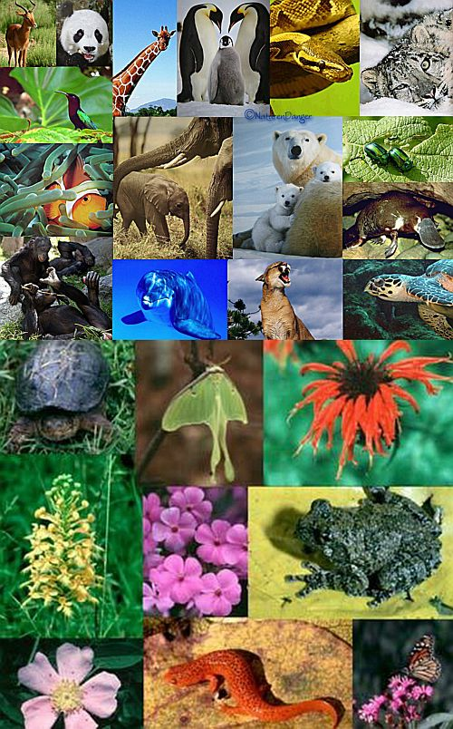 Ad:  Biyolojik Çeşitlilik2.jpg Gösterim: 5647 Boyut:  125.6 KB