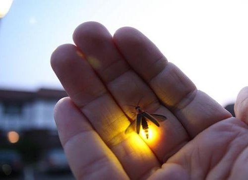 Ad:  Ateş Böceği.jpg Gösterim: 5015 Boyut:  16.6 KB