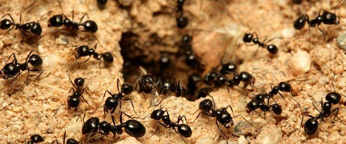 Ad:  Karınca2.JPG Gösterim: 4486 Boyut:  56.6 KB