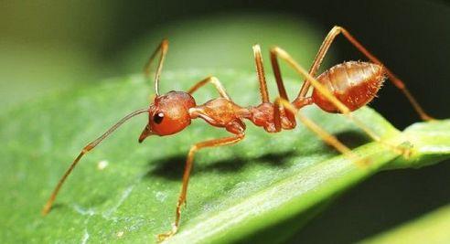 Ad:  Karınca.1.JPG Gösterim: 998 Boyut:  20.0 KB