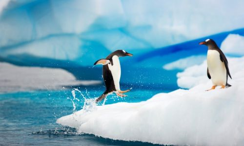 Ad:  Antarktika-4.jpg Gösterim: 424 Boyut:  20.5 KB