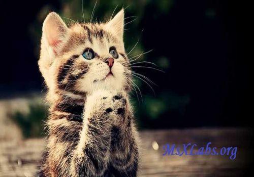Ad:  kedi-3.jpg Gösterim: 268 Boyut:  29.2 KB