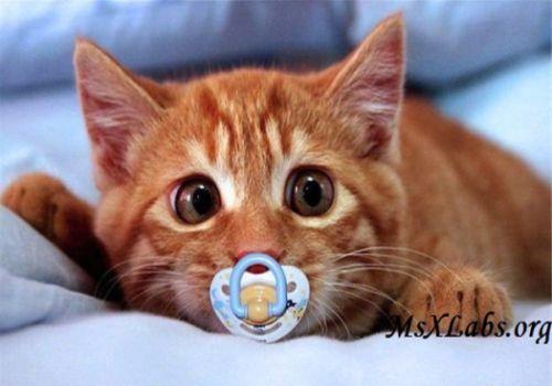 Ad:  kedi.jpg Gösterim: 275 Boyut:  27.0 KB