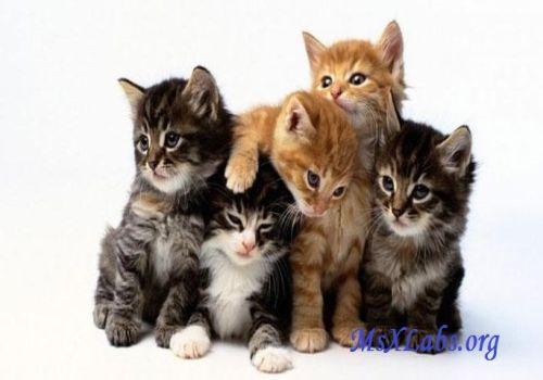 Ad:  kedi-2.jpg Gösterim: 235 Boyut:  24.6 KB
