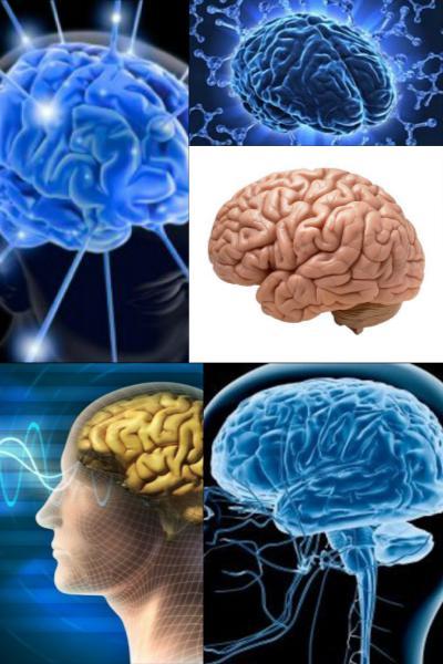 Ad:  Beyin-2.jpg Gösterim: 131 Boyut:  45.3 KB