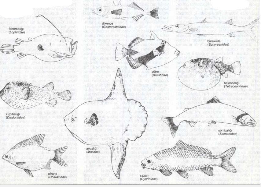Ad:  balık6.JPG Gösterim: 109 Boyut:  95.3 KB