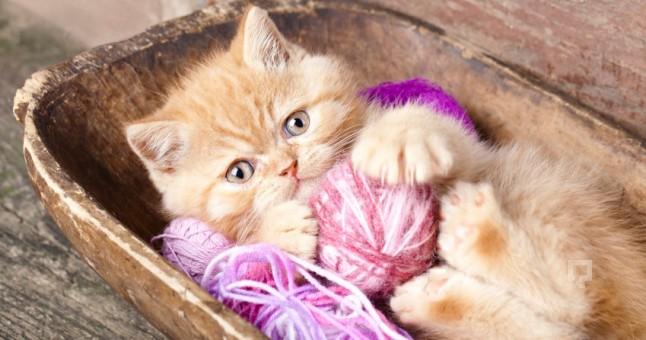 Ad:  dogum-yapan-kediye-nasil-bakim-yapilir_646x340.jpg Gösterim: 153 Boyut:  64.7 KB