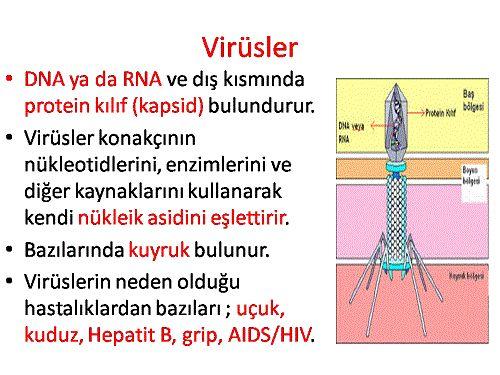 Ad:  Virüs7.JPG Gösterim: 22 Boyut:  49.1 KB
