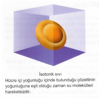 Ad:  av3.JPG Gösterim: 3 Boyut:  20.9 KB