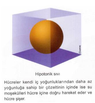 Ad:  av5.JPG Gösterim: 3 Boyut:  21.1 KB