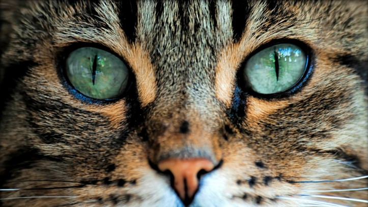Ad:  cats-eyes-7.jpg Gösterim: 64 Boyut:  108.6 KB