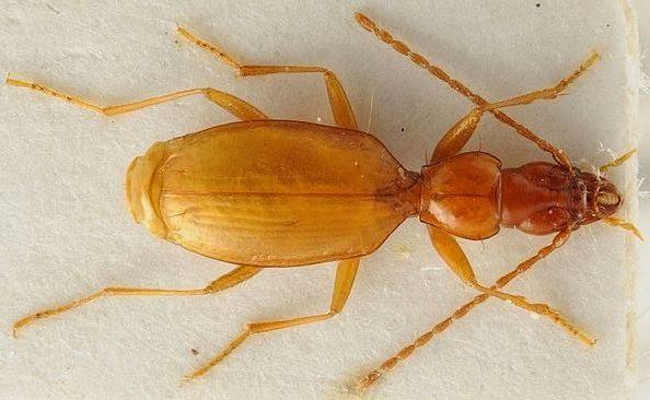 Ad:  hitlers beetle.jpg Gösterim: 360 Boyut:  43.3 KB