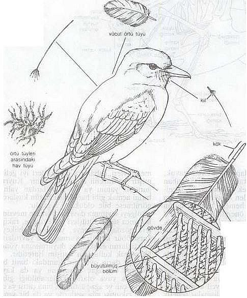 Ad:  kuş1.JPG Gösterim: 418 Boyut:  74.1 KB
