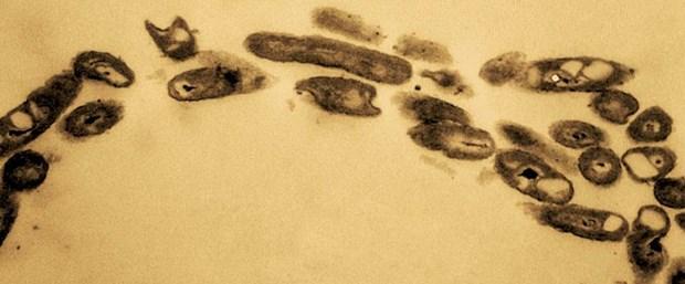 Ad:  petrol-yiyen-bakteriler-okyanuslari-kurtarabilir-mi,pSfsRkdvUECRst72TyaeFA.jpg Gösterim: 107 Boyut:  41.4 KB