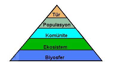 68396d1550101206 ekosistem eko1