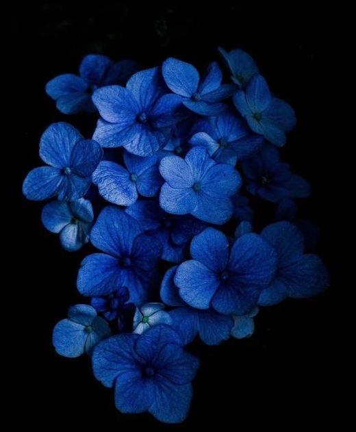 Ad:  mavi49.JPG Gösterim: 109 Boyut:  40.5 KB