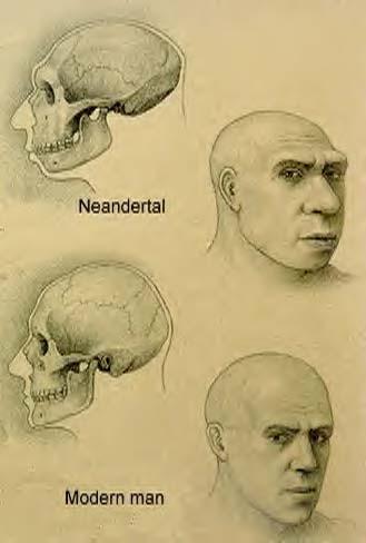 Ad:  neanderthal-man.jpg Gösterim: 11 Boyut:  57.8 KB