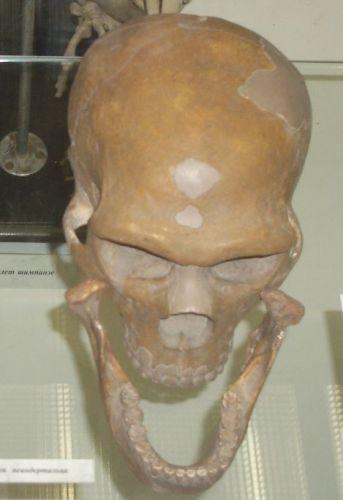 Ad:  neander2.jpg Gösterim: 12 Boyut:  26.8 KB