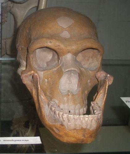 Ad:  neander3.jpg Gösterim: 13 Boyut:  34.5 KB