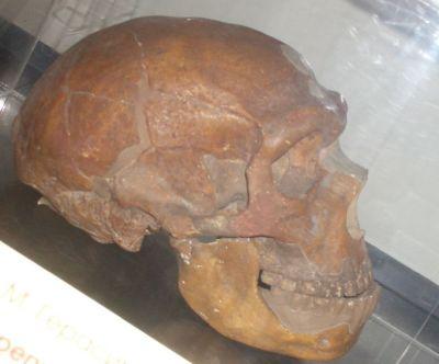Ad:  neander5.jpg Gösterim: 10 Boyut:  24.3 KB