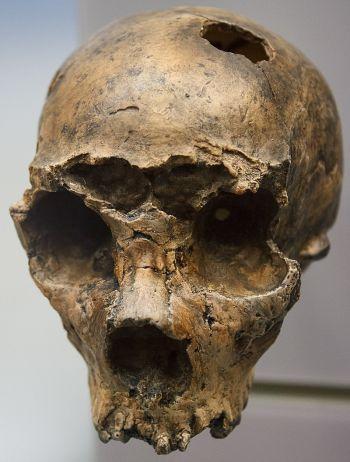 Ad:  neander13.jpg Gösterim: 10 Boyut:  30.3 KB