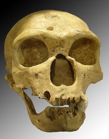 Ad:  neander12.jpg Gösterim: 10 Boyut:  24.8 KB