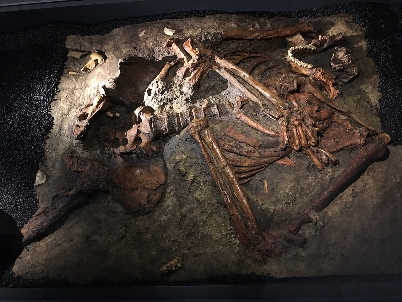 Ad:  neander16.jpg Gösterim: 7 Boyut:  349.1 KB
