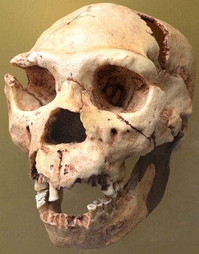 Ad:  neander11.jpg Gösterim: 7 Boyut:  33.6 KB